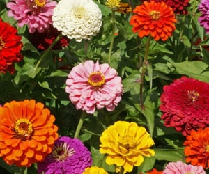 flores, flowers, and gardens image