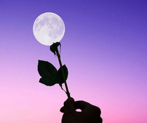 moon, flowers, and purple image