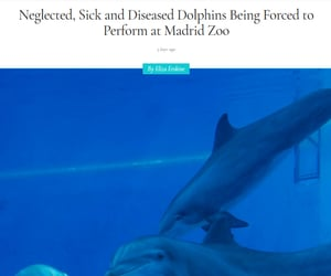 abuse, animal cruelty, and dolphin image
