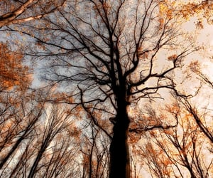 aesthetic, warm colors, and crisp leaves image