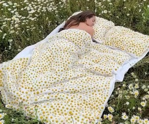 daisies, nature, and relax image