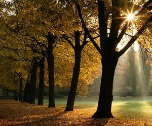 fall, autumn, and sun image