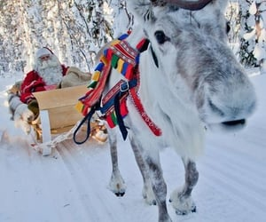 aesthetic, reindeer, and sled image