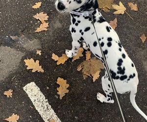 style, details, and dog image