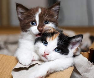 cat, kitten, and love image