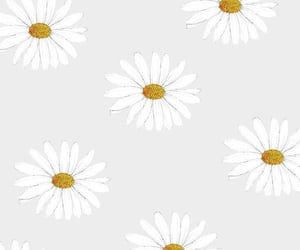 background, chamomile, and flowers image