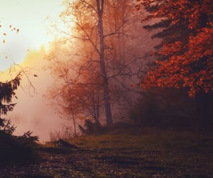 article, autumn, and depression image