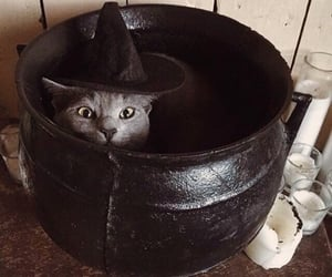 cat, Halloween, and witch image