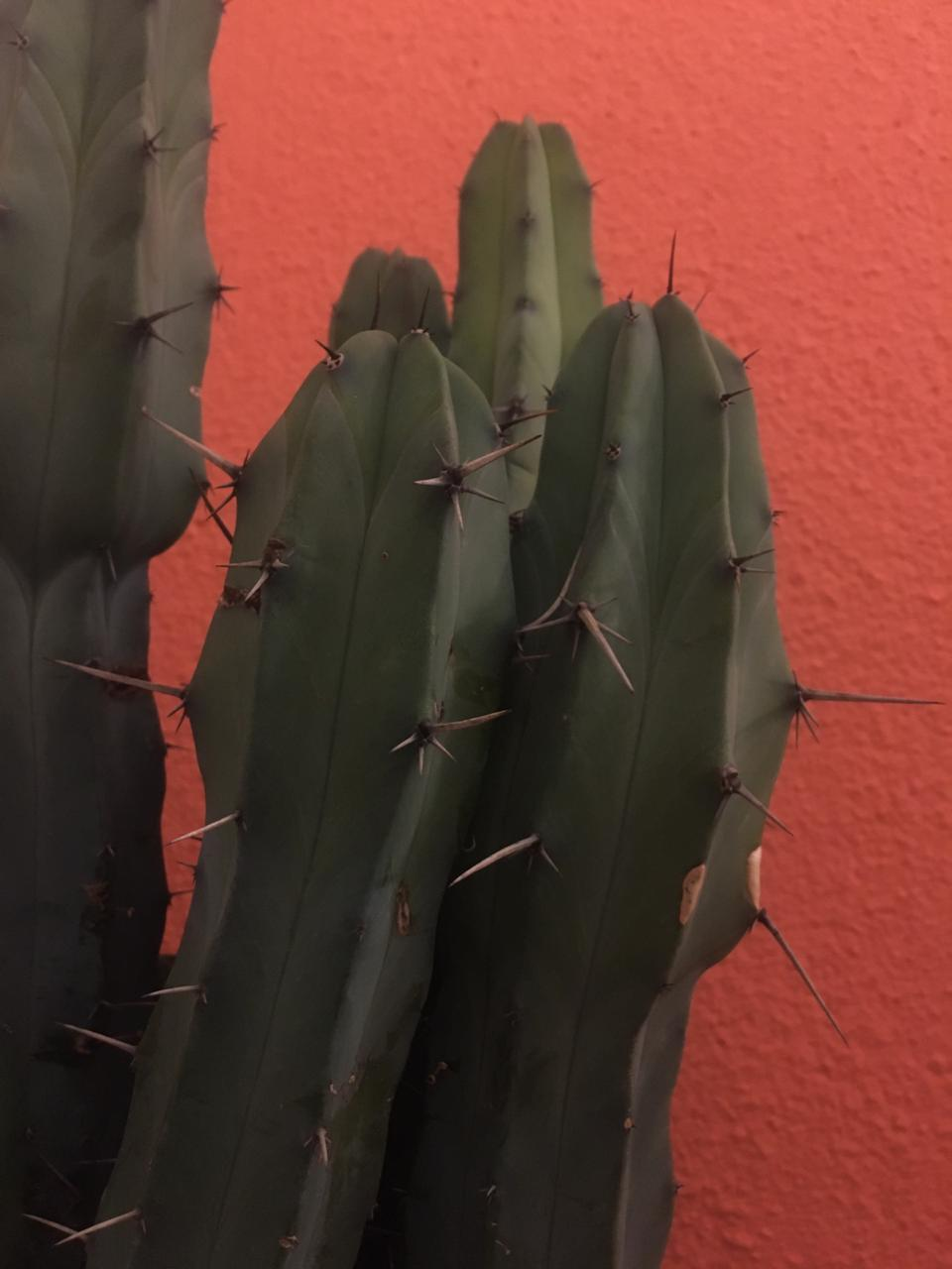 article, beauty, and cactus image
