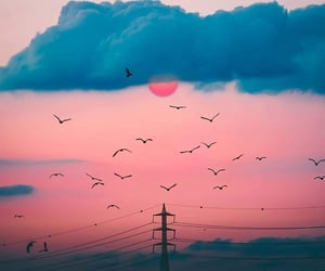 birds, landscape, and nature image