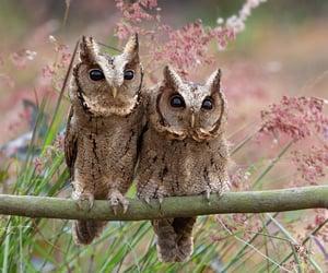owl, animals, and beautiful image