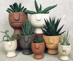 cactus and pot image