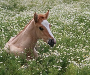 horse, flowers, and meadow image