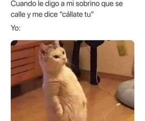 cat, frases, and gato image