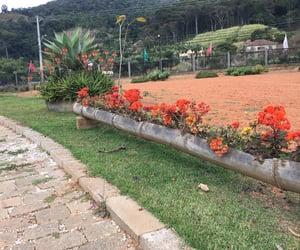 flores, jardim, and nature image