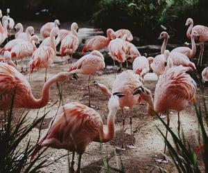 birds and flamingo image