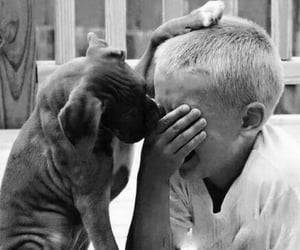 dog, animal, and cry image