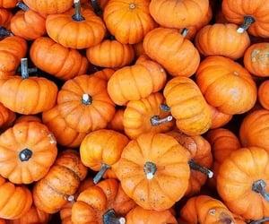 pumpkin, fall, and orange image