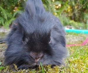 fluffy, HOTTEST, and rabbit image