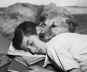 dog and photo image
