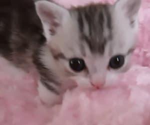 gif, animal, and baby animals image
