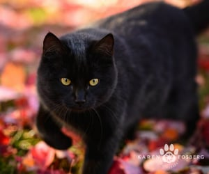 autumn, cats, and kittens image