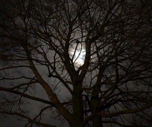 nightsky, sky, and tree image