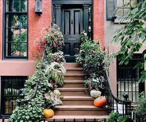 autumn, brownstone, and cities image