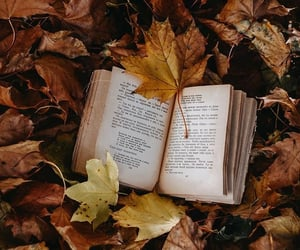 autumn, book, and mood image