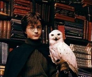 harry potter, hedwig, and book image