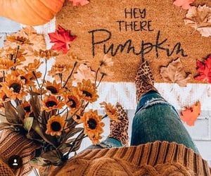 autumn, pumpkin, and sunflowers image