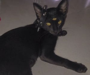 cat, edgy, and goth image
