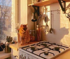 cat, animal, and kitchen image
