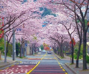 aesthetic, pink, and seoul image