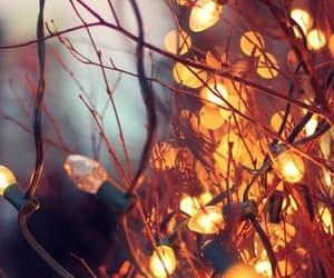 light, autumn, and winter image