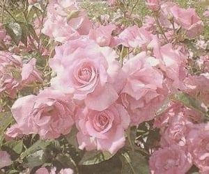 aesthetic, softie, and pink theme image