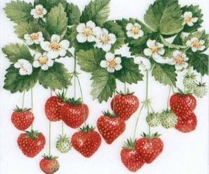 fruit, plants, and retro image