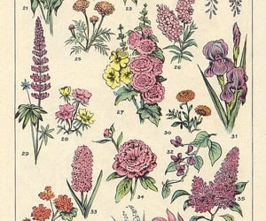 flowers, garden, and print image