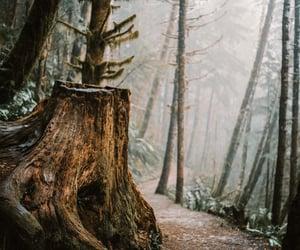 autumn, nature, and stump image