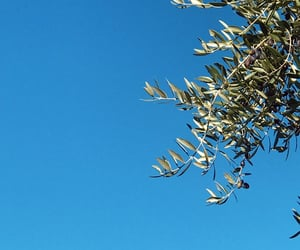 blue sky, girl, and olive tree image