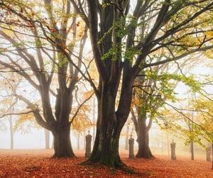 autumn, cemetery, and sun image
