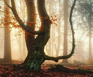autumn, forest, and quirky image