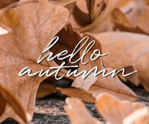 autumn colors, fall, and fall leaves image