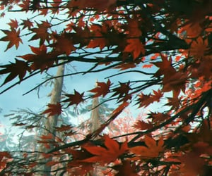 anime, leaves, and maple image