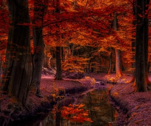 enchanted forest, forest stream, and autumn woods image