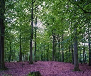 denmark, forest, and hunt image