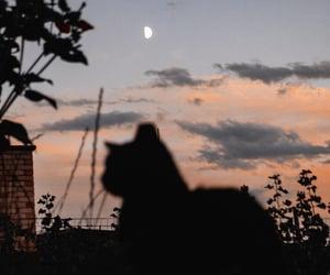 aesthetic, black cat, and cat image