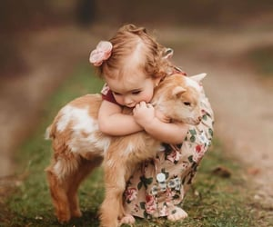 animals, goat, and baby image