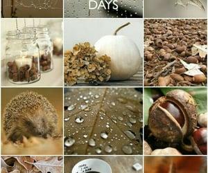 aesthetic, autumn, and rainy day image