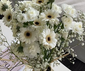 baby's breath, flowers, and white image